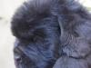 light-blue-male1